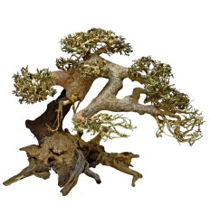 Bonsai Driftwood L